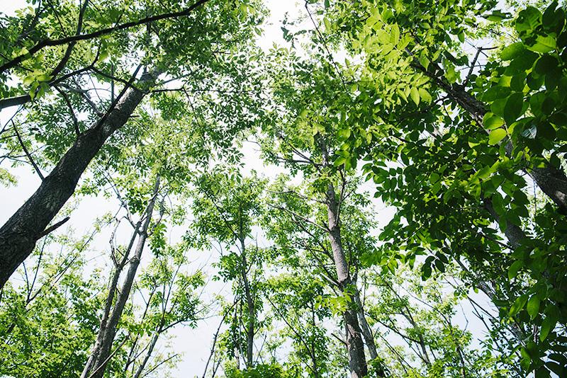 うるしの森