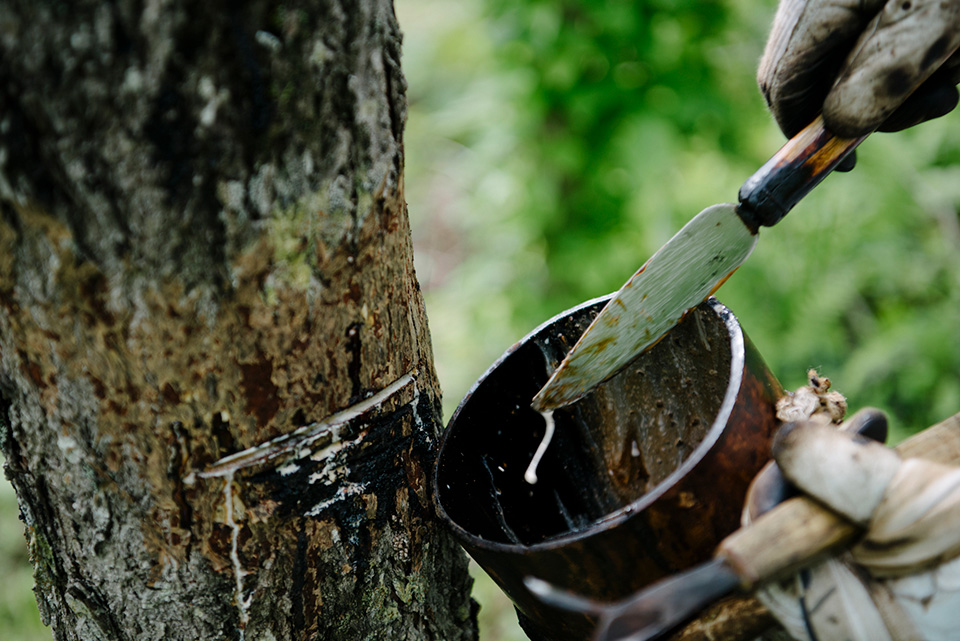 1本のウルシの木から採れる漆は牛乳瓶1本分といわれている。一筋の水を、ヘラで掻きとるという行為は、気が遠くなるような作業ではないだろうか。