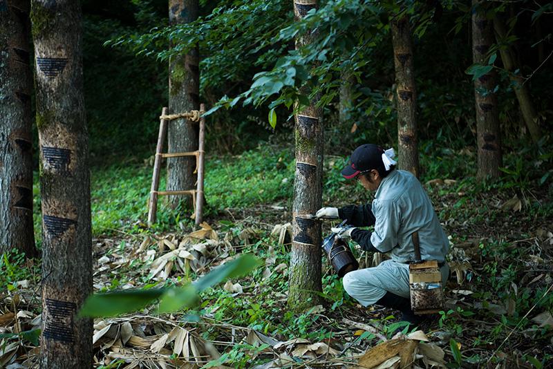 鈴木さんの漆掻きは、日本うるし掻き技術保存会の冊子としても刊行された。